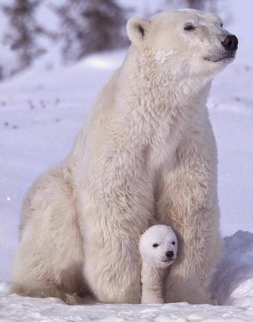 Polar+protection.jpg