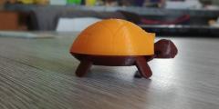 turtle1.jpg