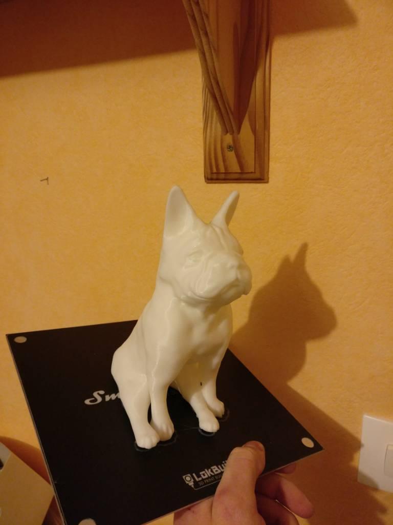 Bulldog blanc@klem1