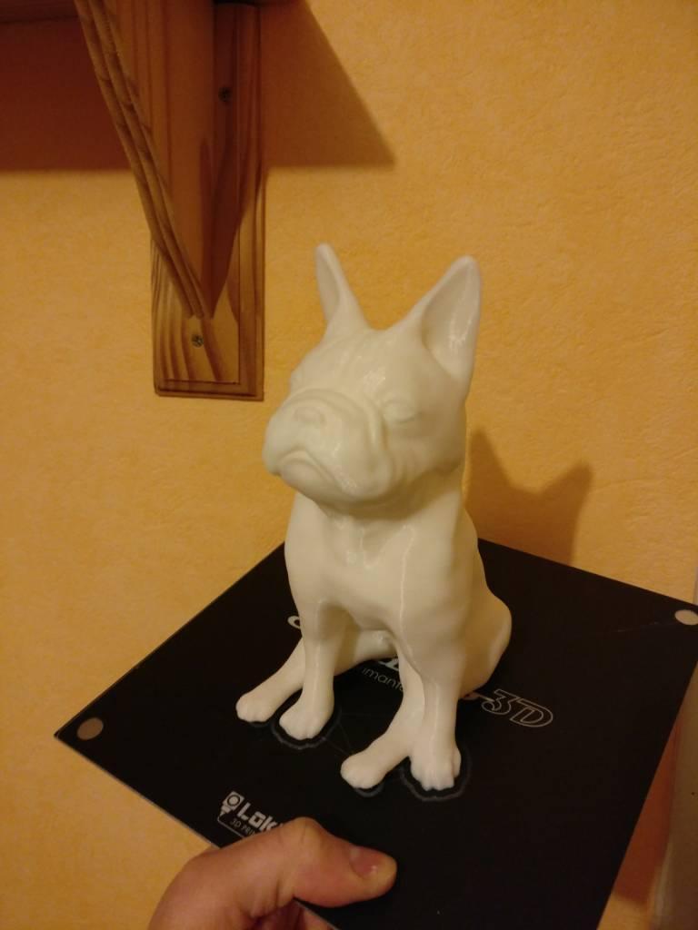 Bulldog blanc (@klem1)