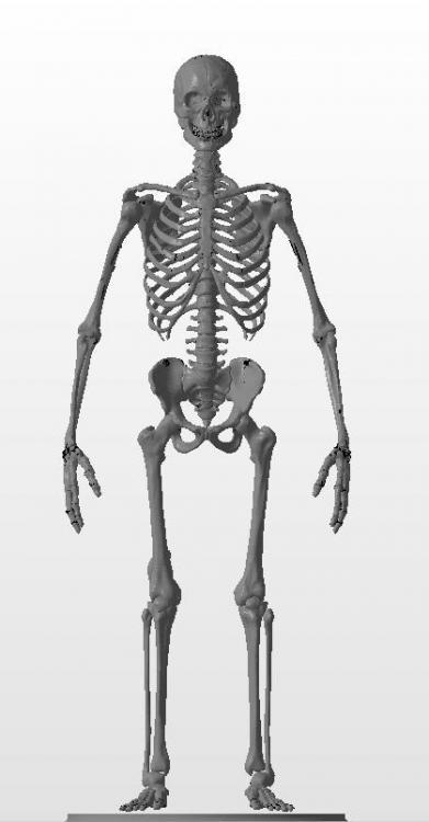 Squelette.thumb.jpg.600c7df3955fe83f624451310a33d5d4.jpg