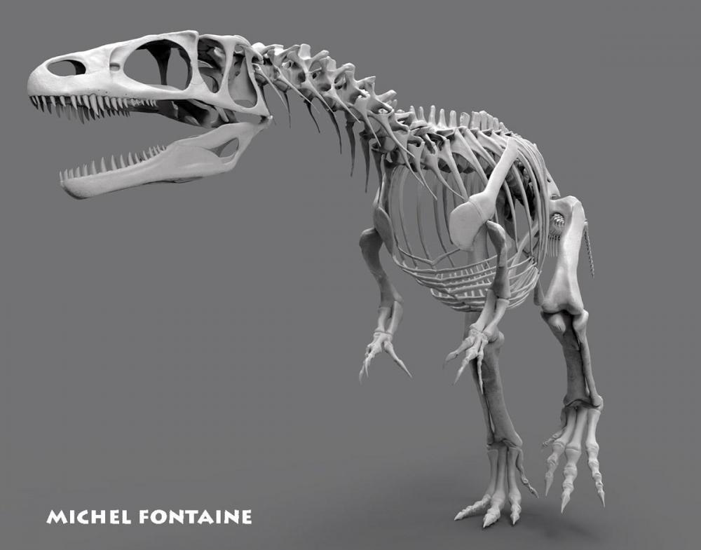 strepto squelette complet.808.jpg