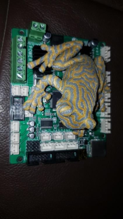 Frog_Dual_Color.thumb.jpg.79996b1975810ea4ea2158e705e44e19.jpg