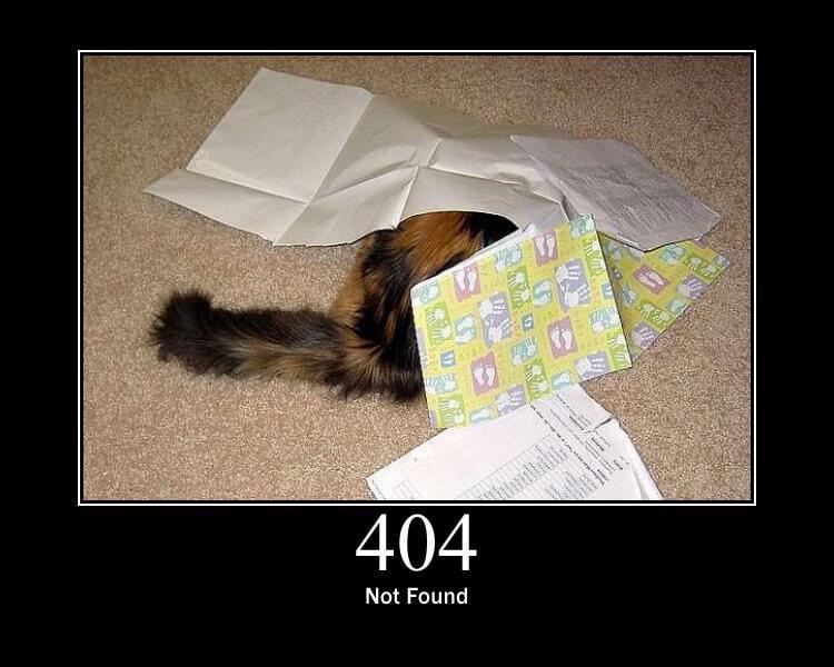 404_http_cat.jpg.e9b7e7be3be236f9e4e667562a0bc102.jpg