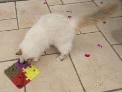 CatToy2.jpg