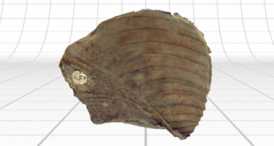 fossile 3d