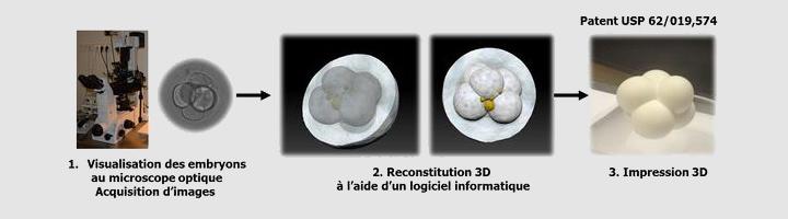 Embryon imprimé en 3D