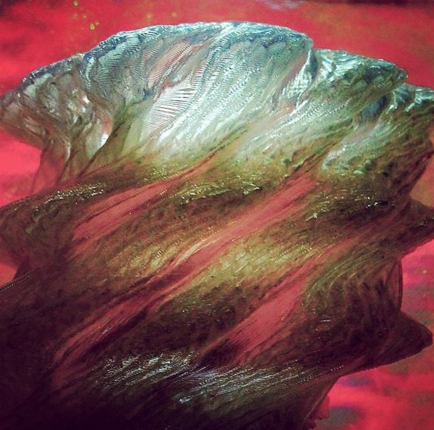 Musique 3d Radiohead Weird Fishes Arpeggi Les