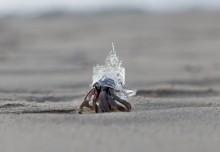 Un bernard l'hermite avec une coquille personnalisée imprimée en 3D !