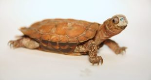 masque tortue imprimé en 3D