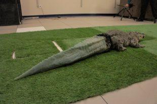 alligator 3D