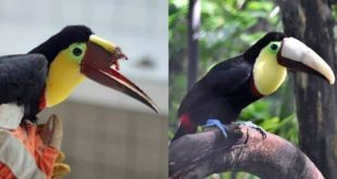 photo bec toucan 3D